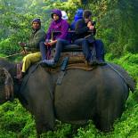 chitwan-jungle-tours