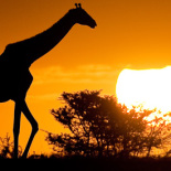 luxury_safari_kenya1